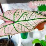 Мои новые комнатные растения. Коллекция пополняется. Обзор цветов и цены на них.
